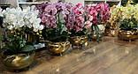 Орхидея - изысканное украшение дома, фото 2