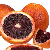 """Апельсин """"Моро"""" нуцелярный (Moro nucellare) Кровавый 20-25 см. Комнатный"""