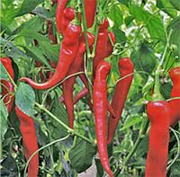 Перец острый Янка F1 (Yanka RZ), 100 семян