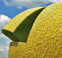 Дыня Джукар F1 (Jucar RZ), 1000 семян (тип Галия), плод 2,5-3,0 кг