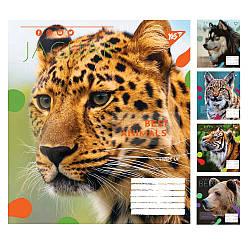 Тетрадь в линию 24 листов YES Animal