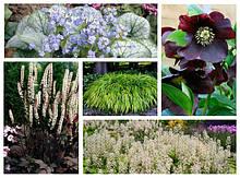 Саджанці і кореневища багаторічних рослин для саду і дачі.