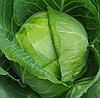 ЭМИЛИ F1 - семена капусты белокочанной калиброванные