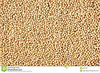 Горчица семена купить оптом и в розницу