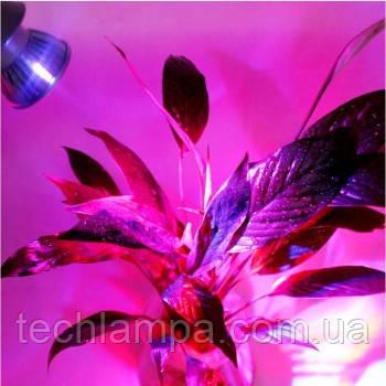 Фитолампы для растений 15W E27