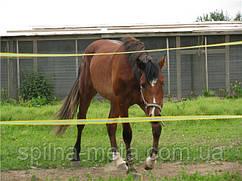 Електропастух Corral B170 для коней (Преміум комплект c композитними стовпчиками та стрічкою у дві лінії)
