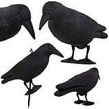 Ворон для отпугивания птиц Springos SKL41-277657, фото 6