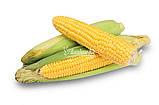 Семена сладкой кукурузы Сентинель F1, 5000 семян, фото 2