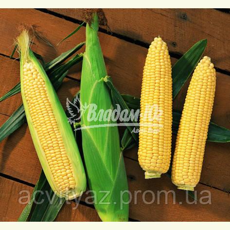 Семена сладкой кукурузы Сентинель F1, 5000 семян