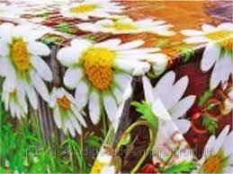 Клеенка кухонная столовая силикон 1,37 Bona Domus 8343Е