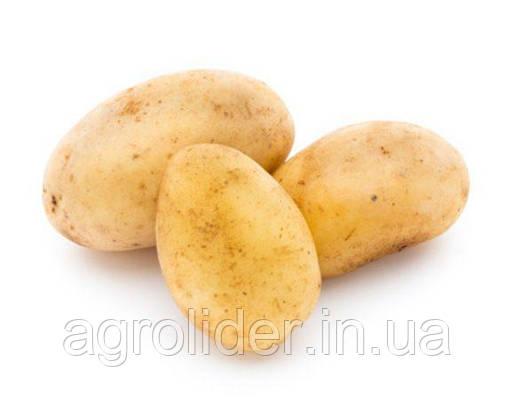 Догляд за картоплею з моменту посадки до збору врожаю.