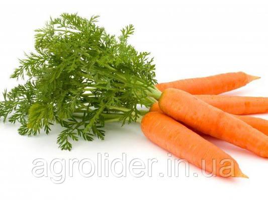 Як виростити моркву?