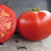 БТ 1019 F1 (BT 1019 F1) насіння томата детермінантного 1000 н  (BT Tohum)