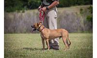 Ошейник для дрессировки собак Garmin Sport PRO, фото 4