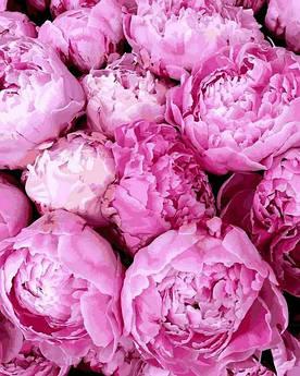 Картина по номерам Mariposa Прелесть розовых пионов (MR-Q2284) 40 х 50 см