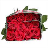 Роза Фридом Эквадор. Roses Reedom Ekvador, фото 2