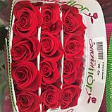 Роза Фридом Эквадор. Roses Reedom Ekvador, фото 3