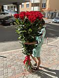 Роза Фридом Эквадор. Roses Reedom Ekvador, фото 6