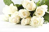 Роза Мондиаль Эквадор. Roses Reedom Ekvador, фото 4