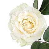 Роза Мондиаль Эквадор. Roses Reedom Ekvador, фото 3