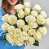 Роза Мондиаль Эквадор. Roses Reedom Ekvador, фото 7