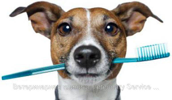 Полировка зубов животного до 15 кг (без стоимости седации)