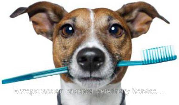 Снятие зубного камня ультразвуком у собак и кошек ІІІ степени (без стоимости седации)