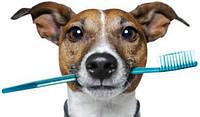 Снятие зубного камня ультразвуком у собак и кошек І степени (без стоимости седации)