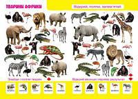 """Книга-картонка """"Первый фото-виммельбух. Животные. Открой, посчитай, запомни"""" (укр) F00019889, Crystal"""