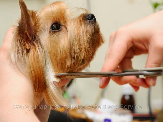 Гигиеническая стрижка собак (уши,лапки,попа) ІІ степ.сложности