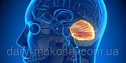 Мозжечковая стимуляция – специальный комплекс упражнений