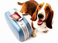 Оформление документов на животное для выезда за рубеж (без титра антител к бешенству)
