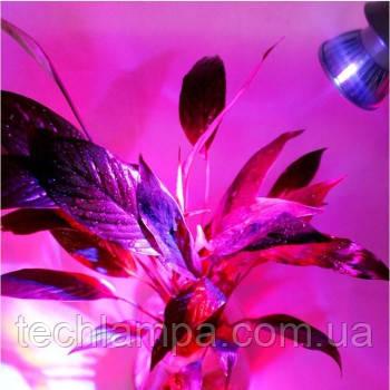 Фитолампы для растений 6W E27