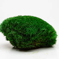 Стабилизированный мох кочковой, фото 1