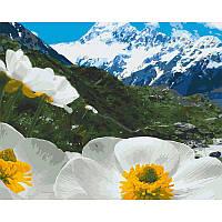 """Набір для розпису """"Альпійські маки"""" 40*50 см 10564-AC"""
