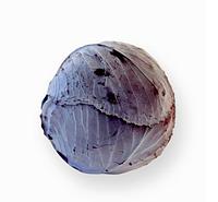 РЕКСОМА F1 -  капуста краснокочанная, Rijk Zwaan 1 000 семян, Калиброванные