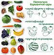 """Набір магнітів Magdum """"Фрукти і овочі"""" ML4031-15 EN, фото 5"""