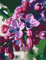 Набор-стандарт акриловая живопись по номерам Сирень ROSA START