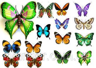Вафельна картинка для кондитерских виробів, топерів, пряників, капкейків Метелики (листок А4) 27