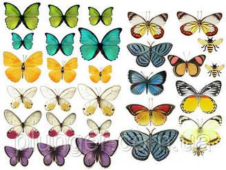 Вафельна картинка для кондитерских виробів, топерів, пряників, капкейків Метелики (листок А4) 29