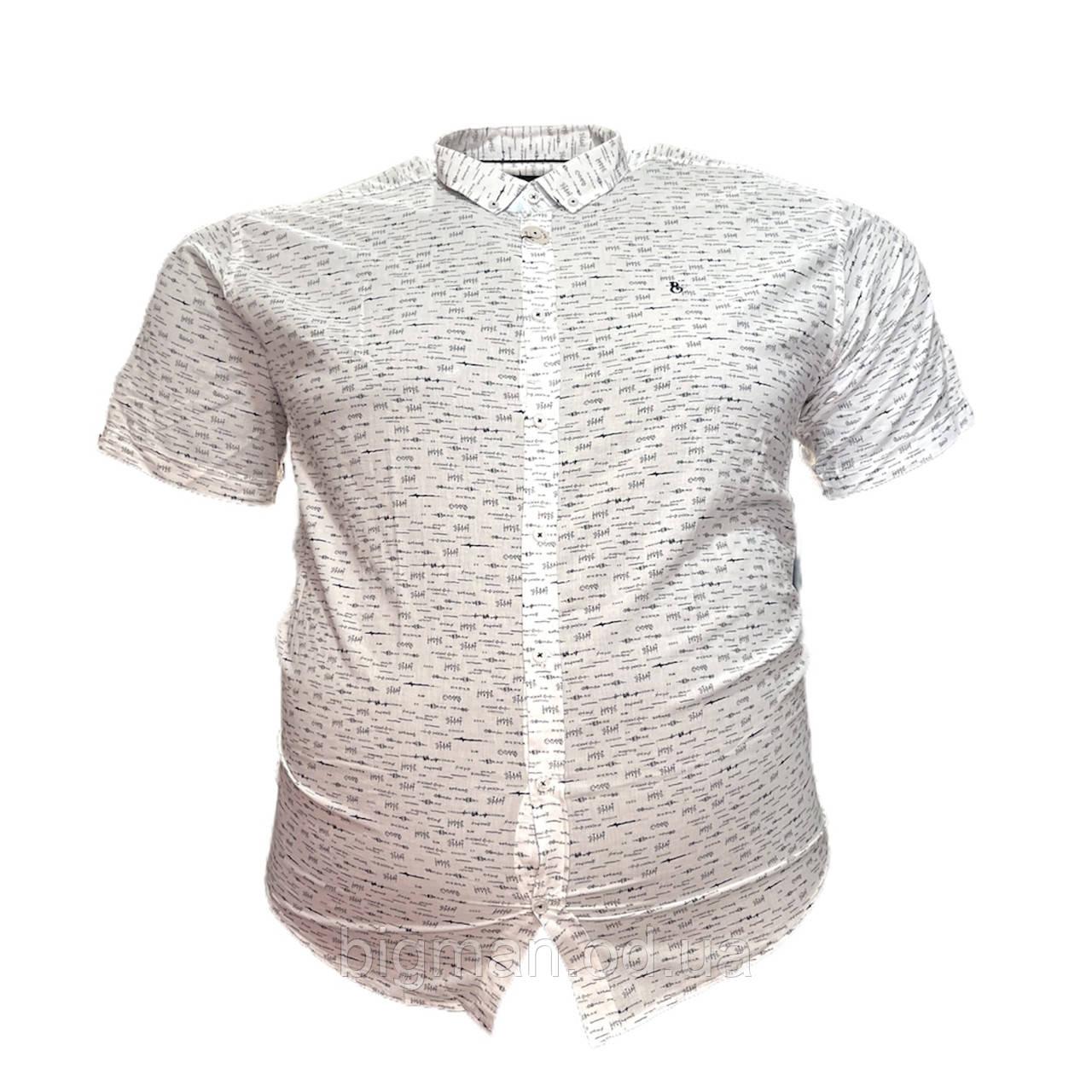 Мужская рубашка с коротким рукавом Barcotti 16082 2XL 3XL 4XL 5XL 6XL белая большие размеры батал Турция