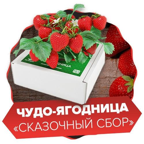 Домашня грядка для полуниці Диво-ягодница «Домашня грядка» — для вирощування полуниці в домашніх умовах
