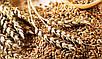 Зернодробилка Беларусь БКИ-4200 (4,2 кВт, 240 кг/год) | кормоизмельчитель, крупорушка, дробилка, корморезка, фото 9