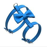 Шлея для малых собак Бабочка №1 кожа голубой