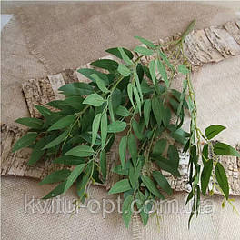 Куст рускуса  зеленый, ветка ивы 50 см