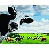 Картина по номерам Веселые коровки, 40*50 см, ST в коробке