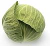 Секома F1 - семена капусты белокочанной калиброванные 1 000 семян, Rijk Zwaan