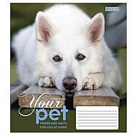 Зошит 12 клітинка Dog loyality 1Вересня (25/500)