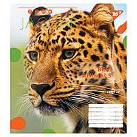 Зошит 18 клітинка Animal Yes (25/400)