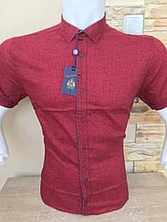 Приталена сорочка з коротким рукавом ANG  (50860)